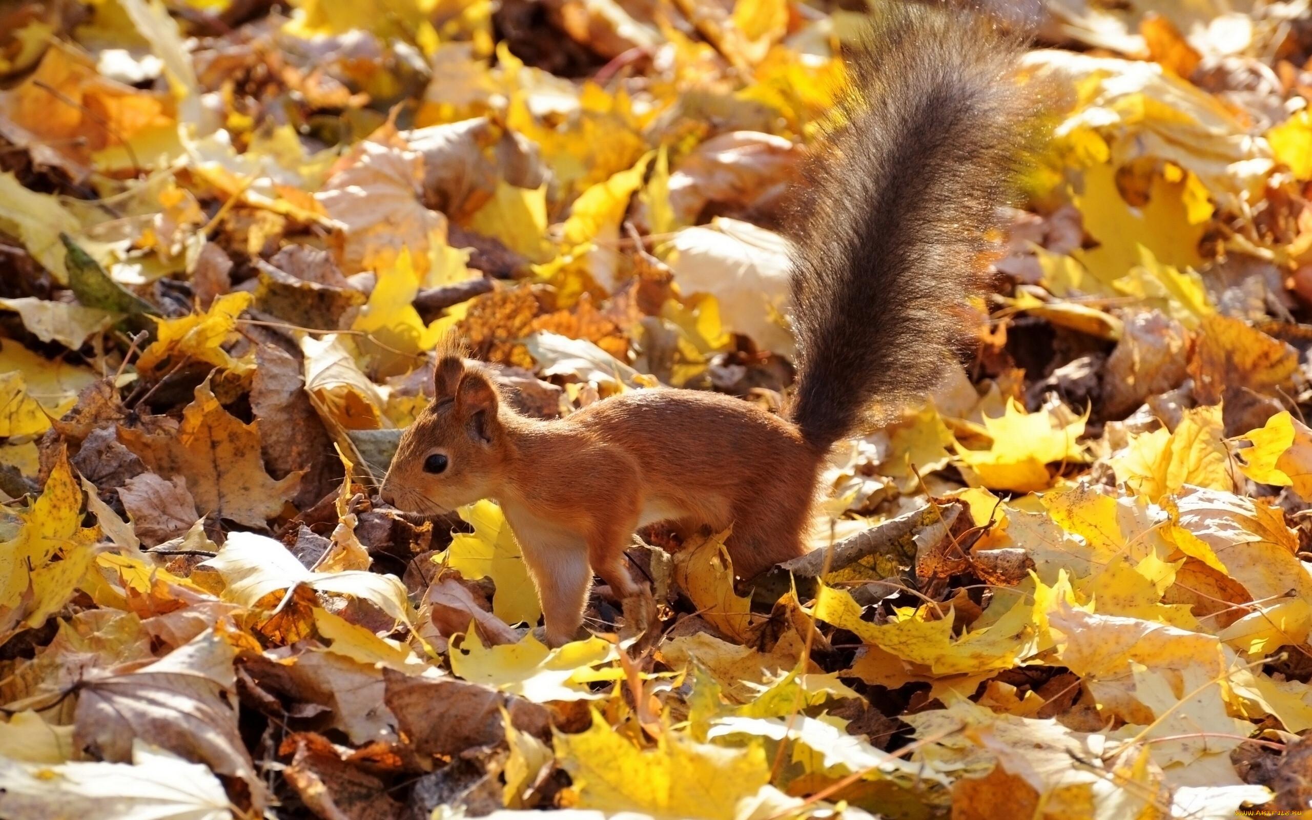 боксерские картинки про осень и животных банк работает